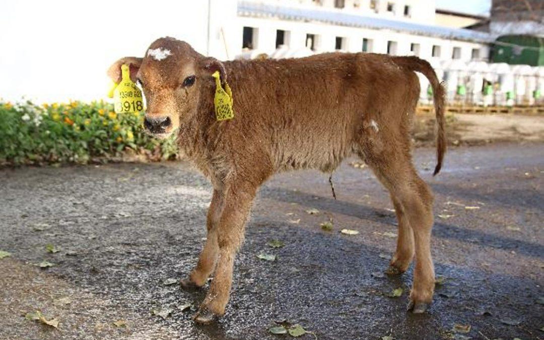 Veterinářská praxe: živočišná výroba Chorušice