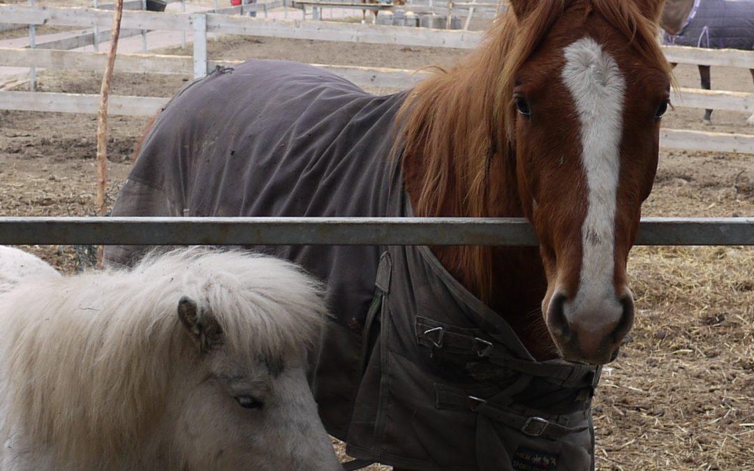 Voda a napájení koní