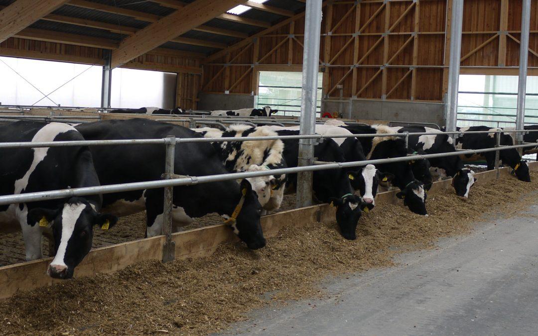 Hodnocení úrovně výživy v chovech dojnic – 2. část