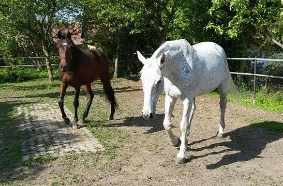 Tuky ve výživě koní