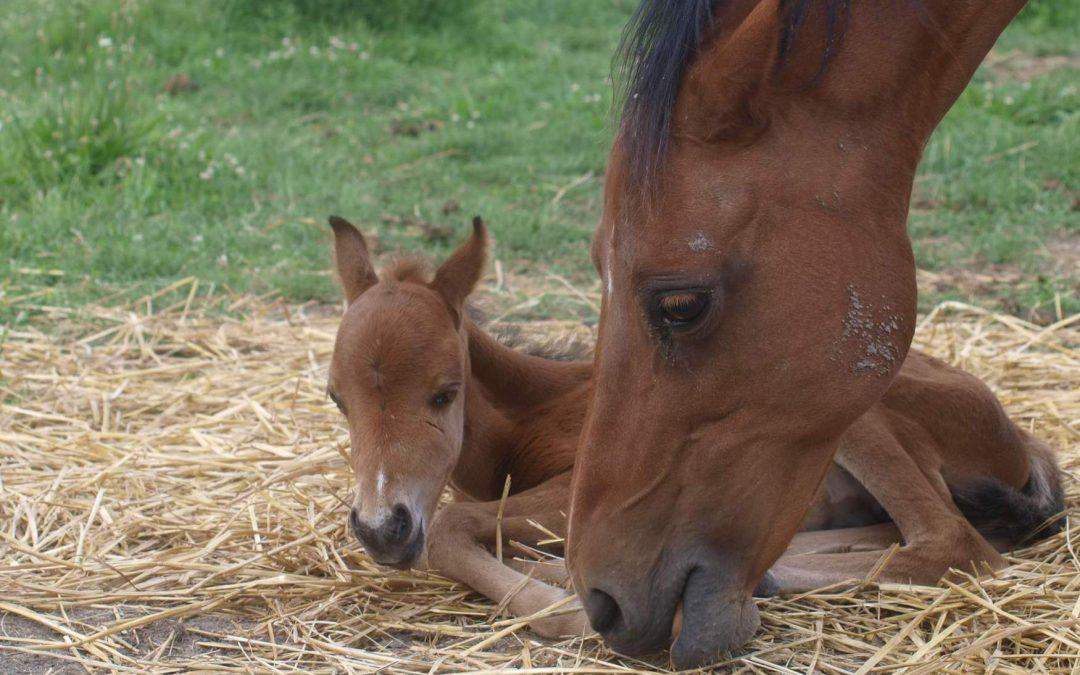 Bílkoviny ve výživě koní