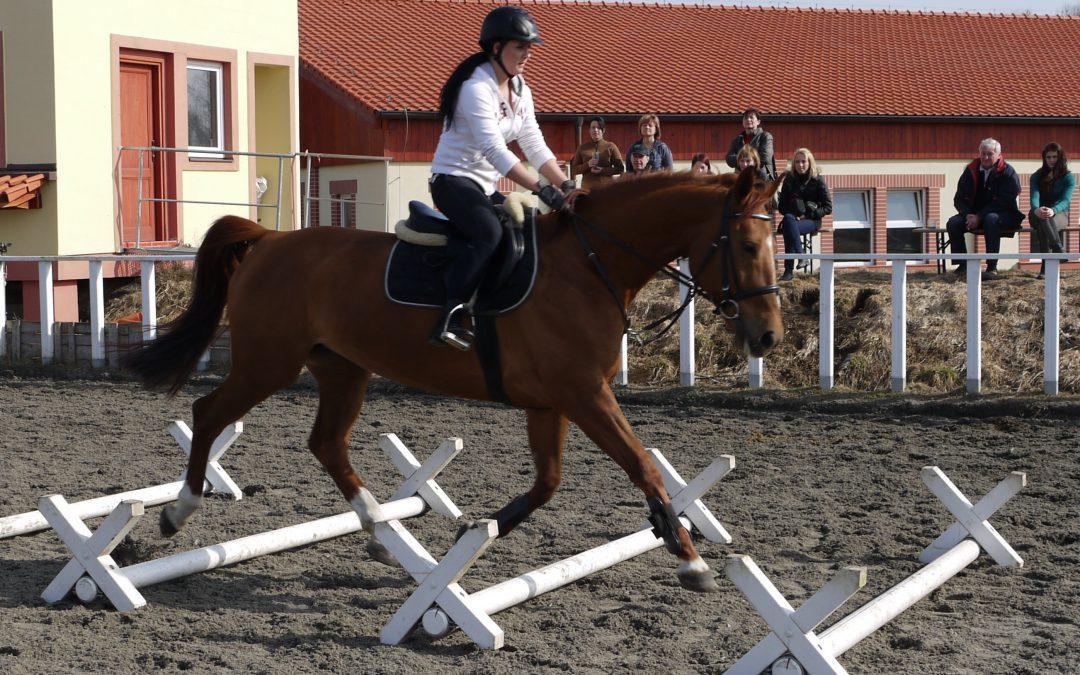 Jaké jsou zdroje energie při využití koně?
