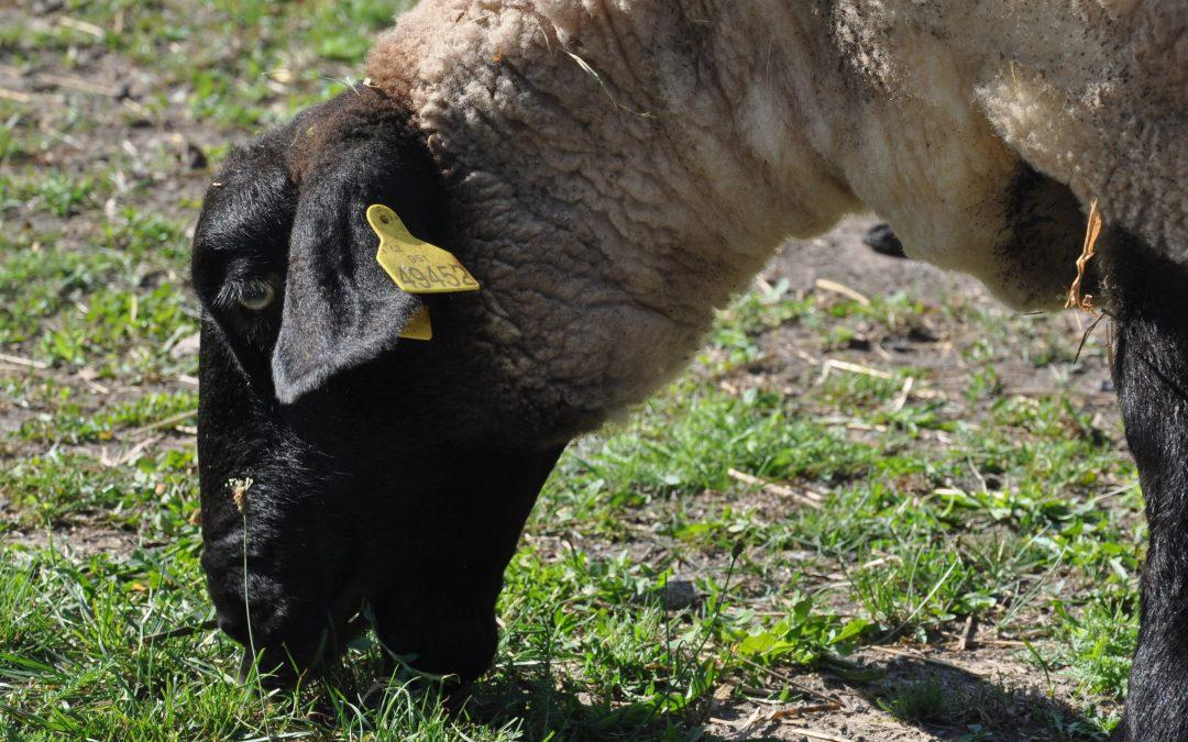 Pastva zajišťuje celkovou potřebu živin