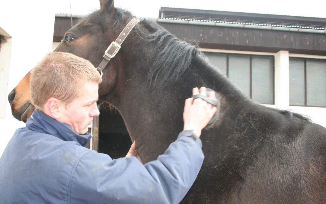 Jaké pomůcky jsou potřeba k čištění koně?