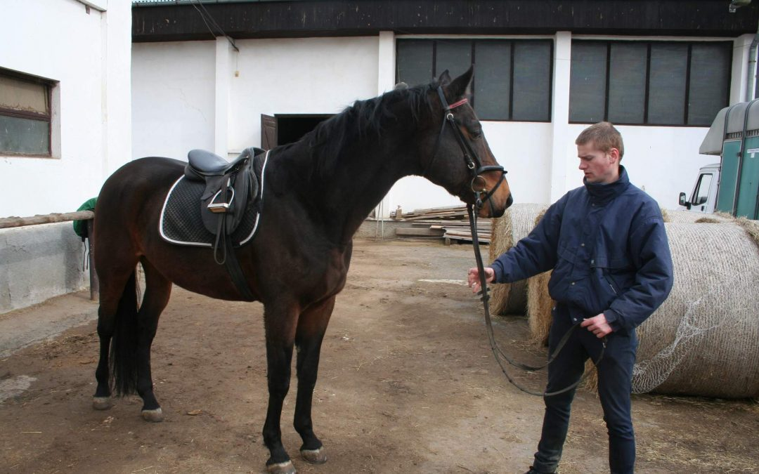 Sedlání a uždění koně