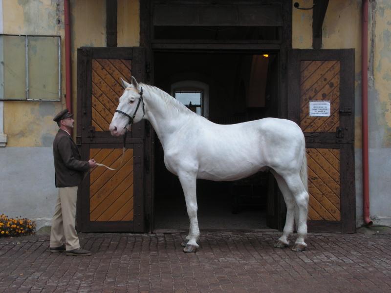 Národní plemena koní – starokladrubský kůň