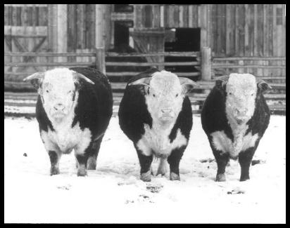 1971salelg