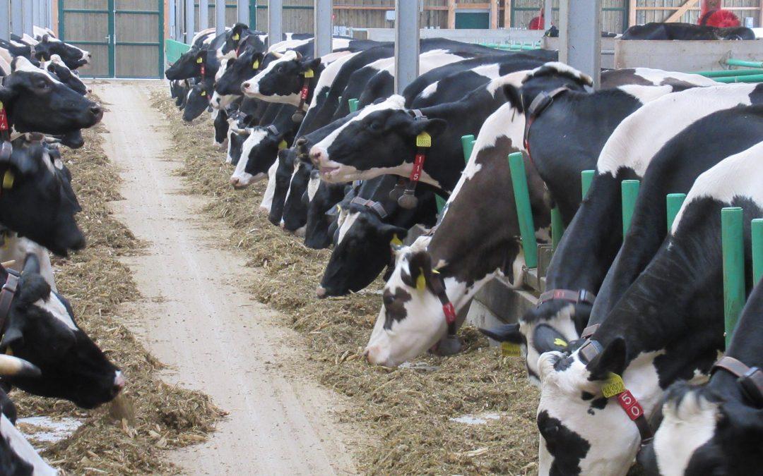Prosincová cena mléka se přiblížila nejvyšší ceně před deseti lety