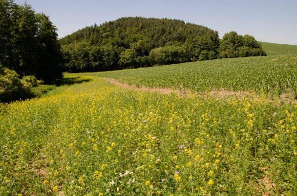 Návrat krajinotvorných prvků v podobě biopásů