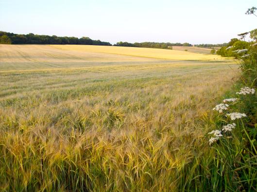 Tržní cena zemědělské půdy se ztrojnásobila