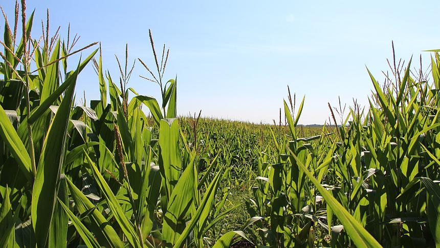 Využití moderních technologií v podobě přesného zemědělství