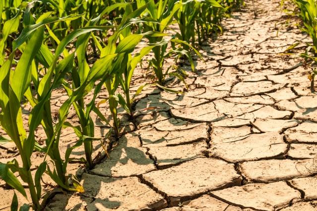 Ministerstvo zemědělství zveřejnilo Zásady pro poskytování dotací na zmírnění škod způsobených suchem