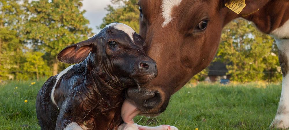 Začínáme podnikat v zemědělství – Reprodukce jako předpoklad produkce