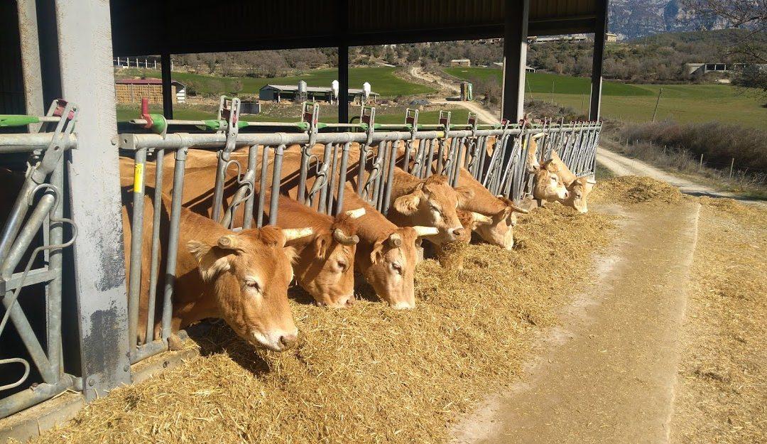 Celosvětová produkce mléka přesáhne miliardu tun