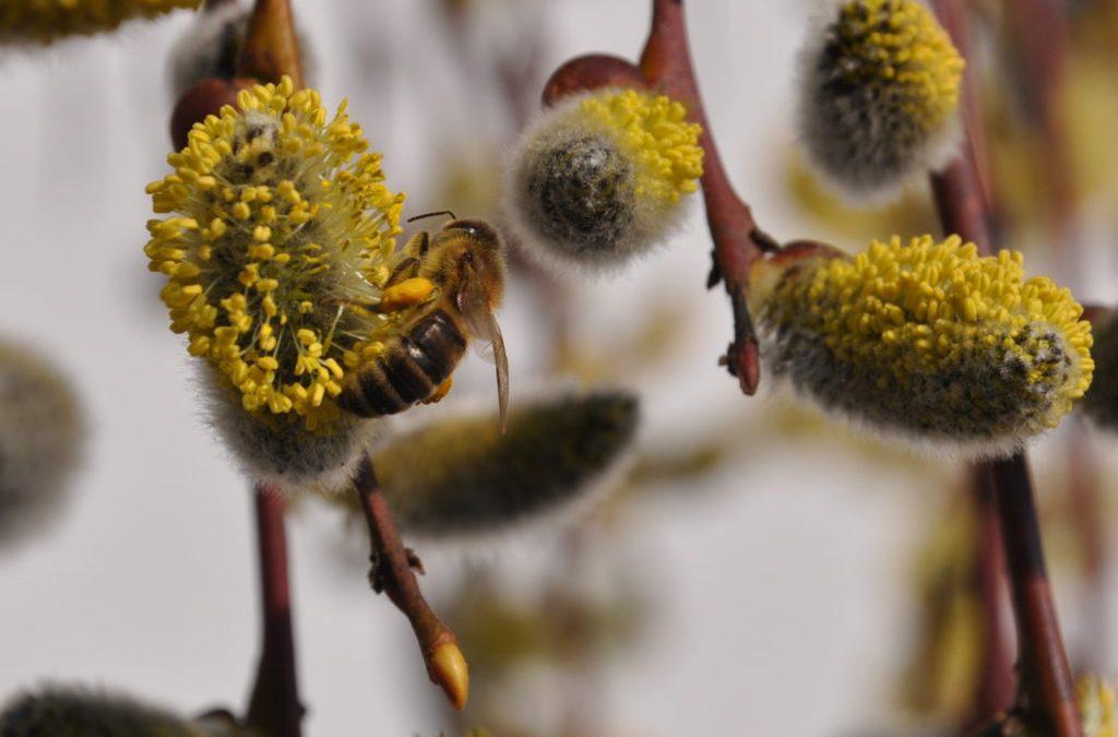 V ČR se po třech letech objevila hniloba včelího plodu