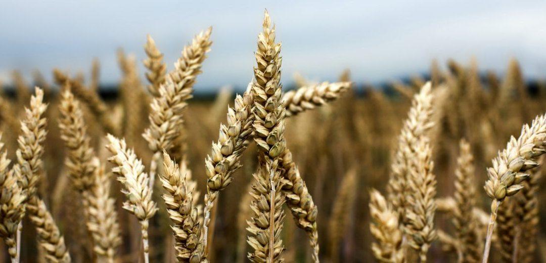 Ministr Toman: Náš zákaz dvojí kvality potravin byl správným krokem. V testu Evropské komise propadla třetina výrobků