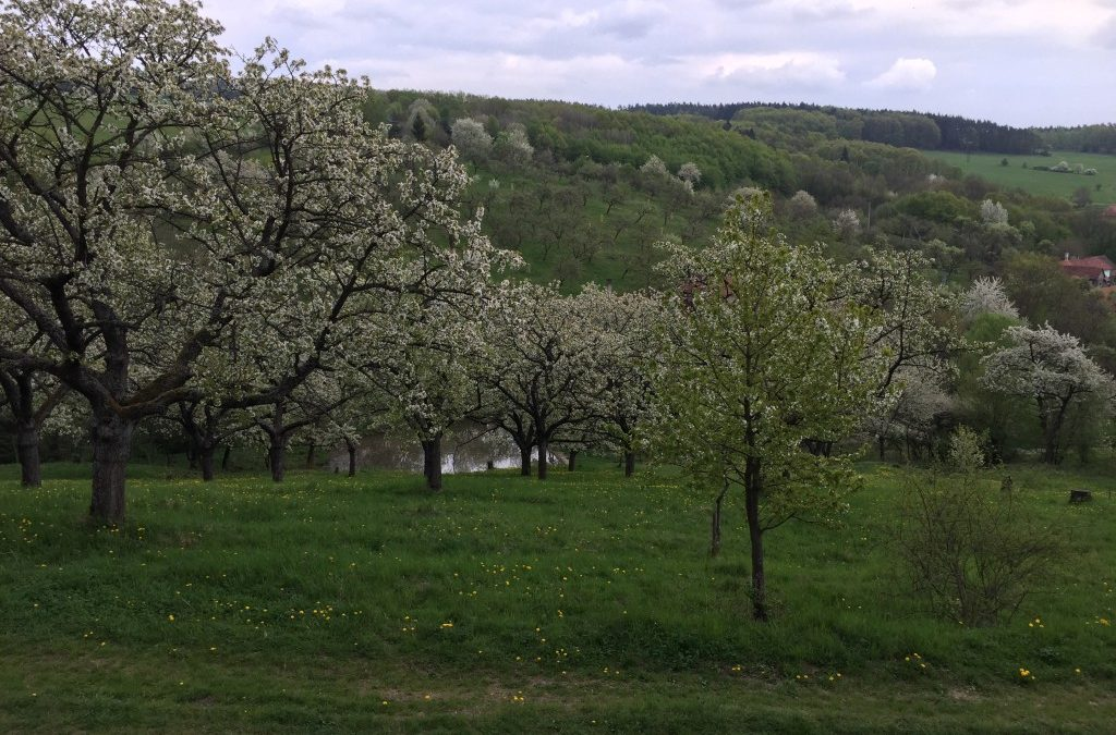 Agrolesnictví v Česku je v začátcích, není všelékem, říká expert