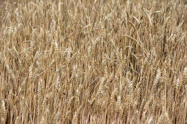 Zemědělský svaz čeká růst tržeb za hlavní produkci o dvě mld. Kč