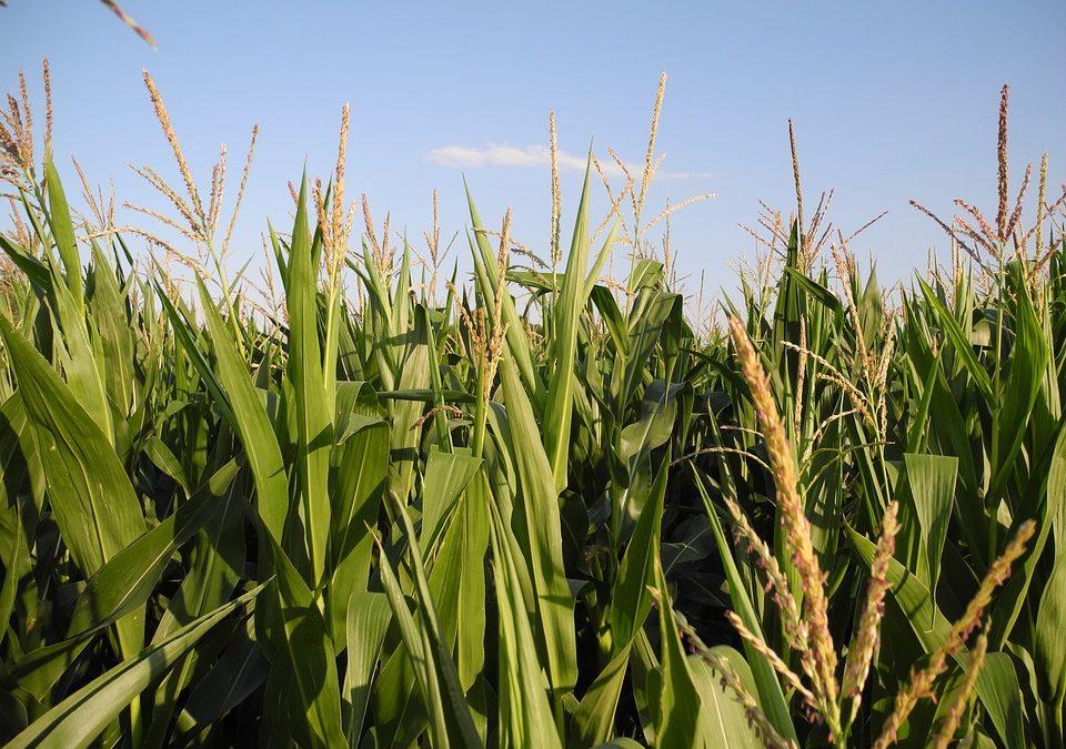Hospodaření po omezení plodin na 30 ha bude náročnější