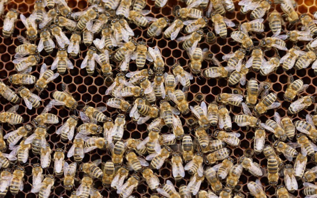 Od příštího roku se změní pravidla ošetřování včelstev i býků