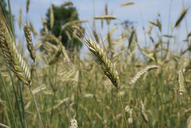 Poplatky za registraci hnojiv se zhruba ztrojnásobí