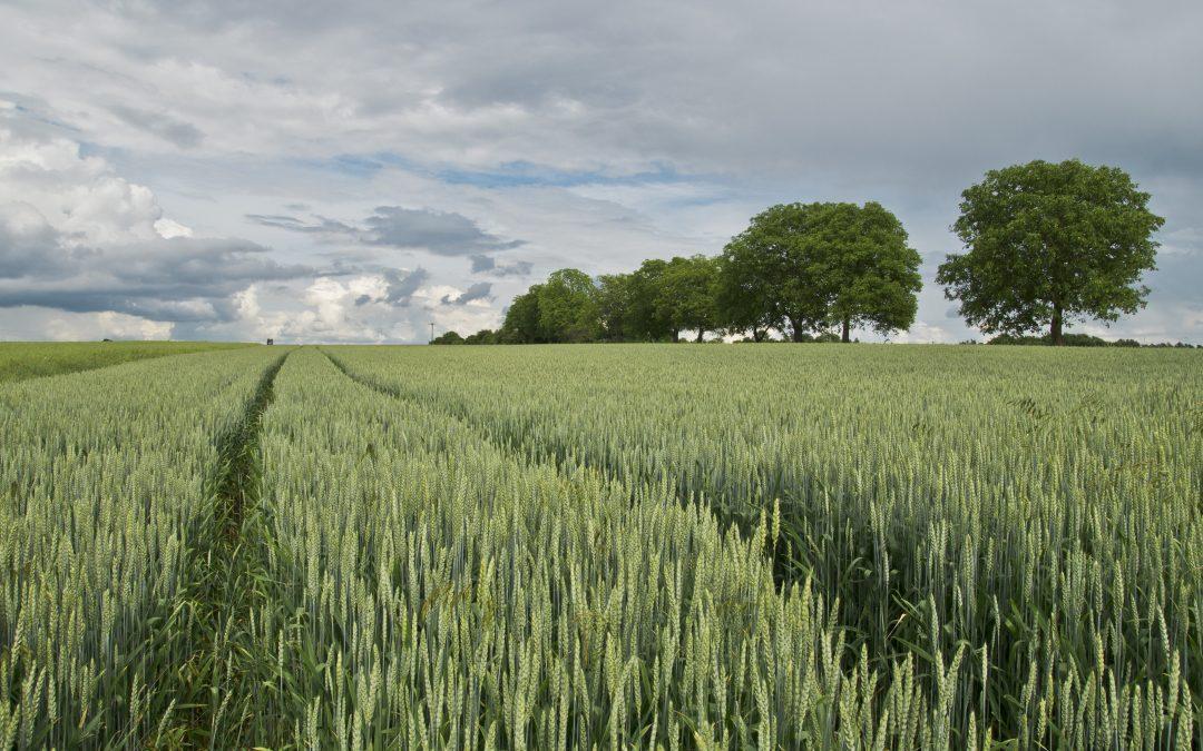 Zemědělský fond bude zveřejňovat, komu dal dotace