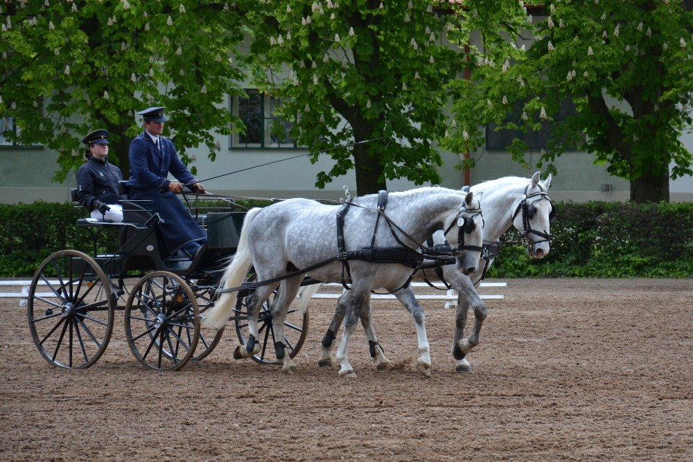 O koně pečují v kladrubském hřebčíně ve dvou turnusech