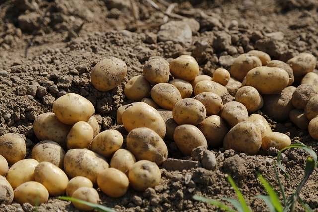Ministr zemědělství Toman: Není důvod panikařit, s výrobou, ani distribucí potravin není a nebude problém