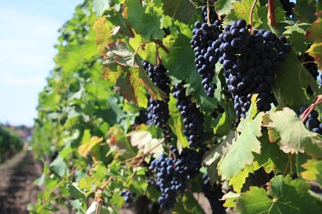 Jarní mrazy zničily úrodu ovoce v ČR, budou každé dva roky