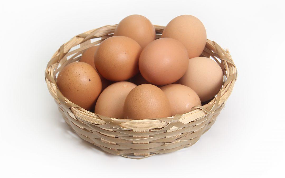 Slepice nebo vejce?