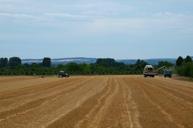 Sklizeň obilovin ve Zlínském kraji loni vzrostla o 16,6 procenta