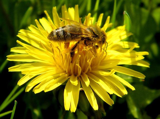 Vědci začínají se světovým sčítáním včel, přispět může každý