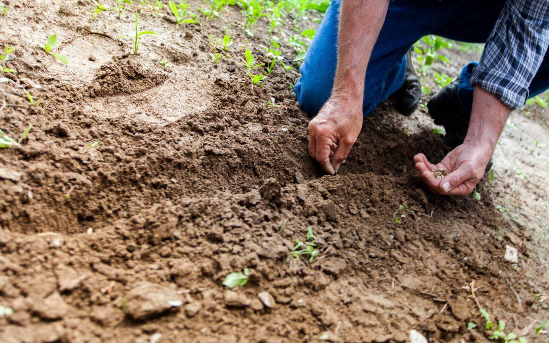 Zahraniční pracovníky v zemědělství se zatím podařilo nahradit