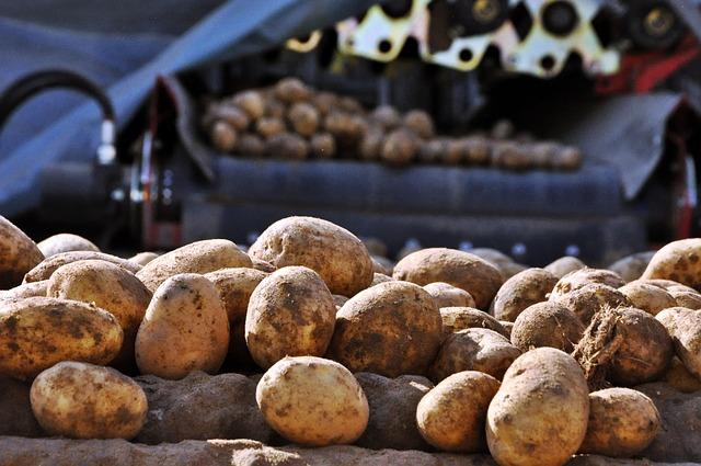 Stát přerozdělí zemědělcům 4 mld.Kč., lesníci peníze nedostanou