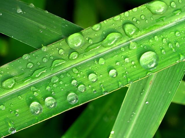 Podniky pro boj se suchem mohou využít dotační výzvy MPO