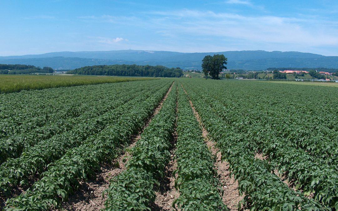 Vláda schválila půl miliardy na splácení půjček pro zemědělce