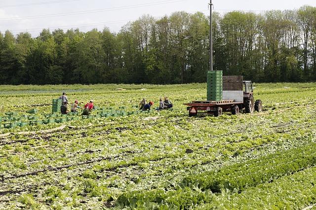 Aktuální informace pro české firmy ke vstupu zahraničních občanů do ČR za účelem zaměstnání v zemědělství