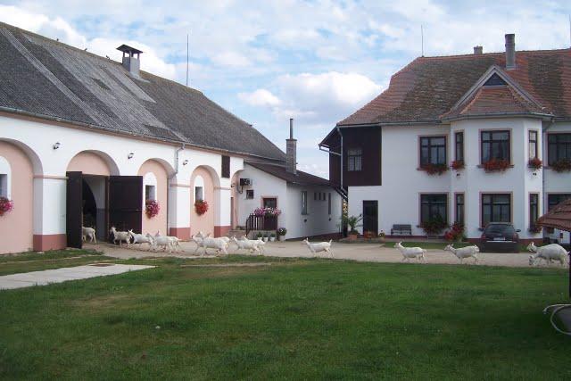Farma v Ratibořicích má 850 koz, výrobky posílá i do Bratislavy
