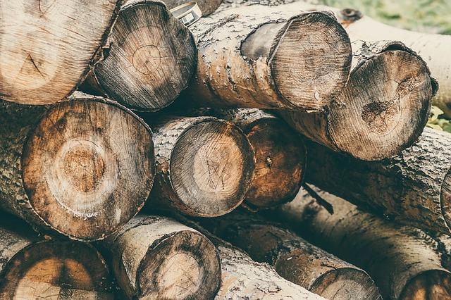 Vláda schválila vyšší příspěvky pro vlastníky lesů včetně Lesů ČR