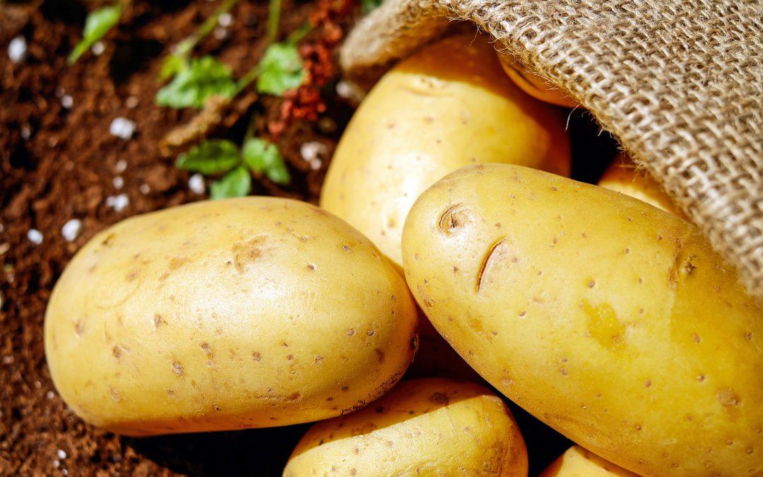 Pěstitelé brambor možná získají od příštího roku novou dotaci