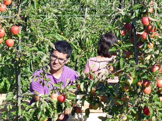 Aktuální informace pro české firmy ke vstupu zahraničních občanů do ČR za účelem zaměstnání v zemědělství a potravinářství