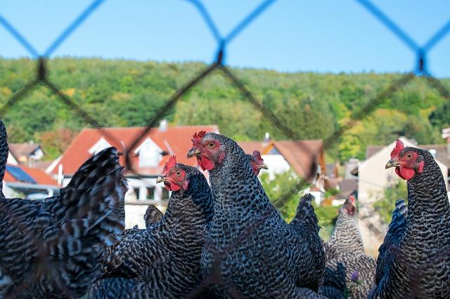 Světová organizace uznala, že v ČR není ptačí chřipka