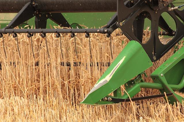 Sklizeň obilovin i řepky bude letos nižší než loni