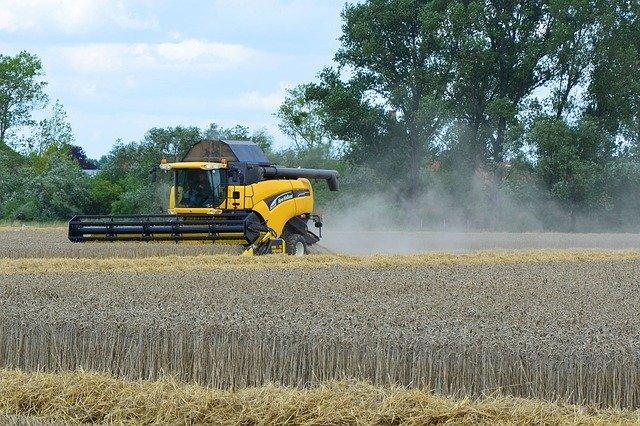 Letošní žně se blíží ke konci, výnos obilovin překonává 6 t/ha