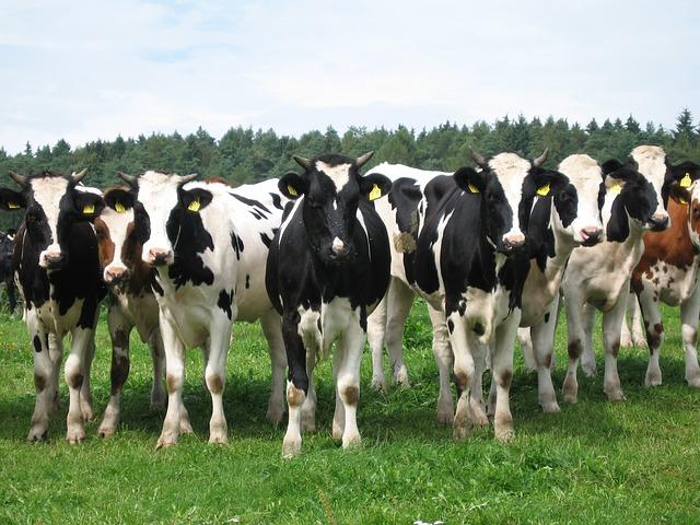 Proti dotacím do živočišné výroby protestovaly stovky lidí