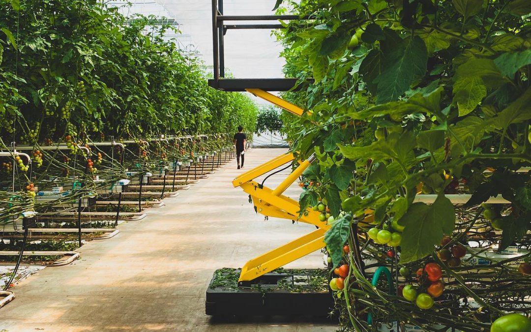 Zeleninová farma Ráječek v Brně sází na přesné zemědělství