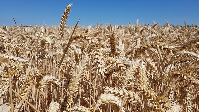 Lidé mohli na dožínkách vidět zemědělskou techniku i ochutnávat