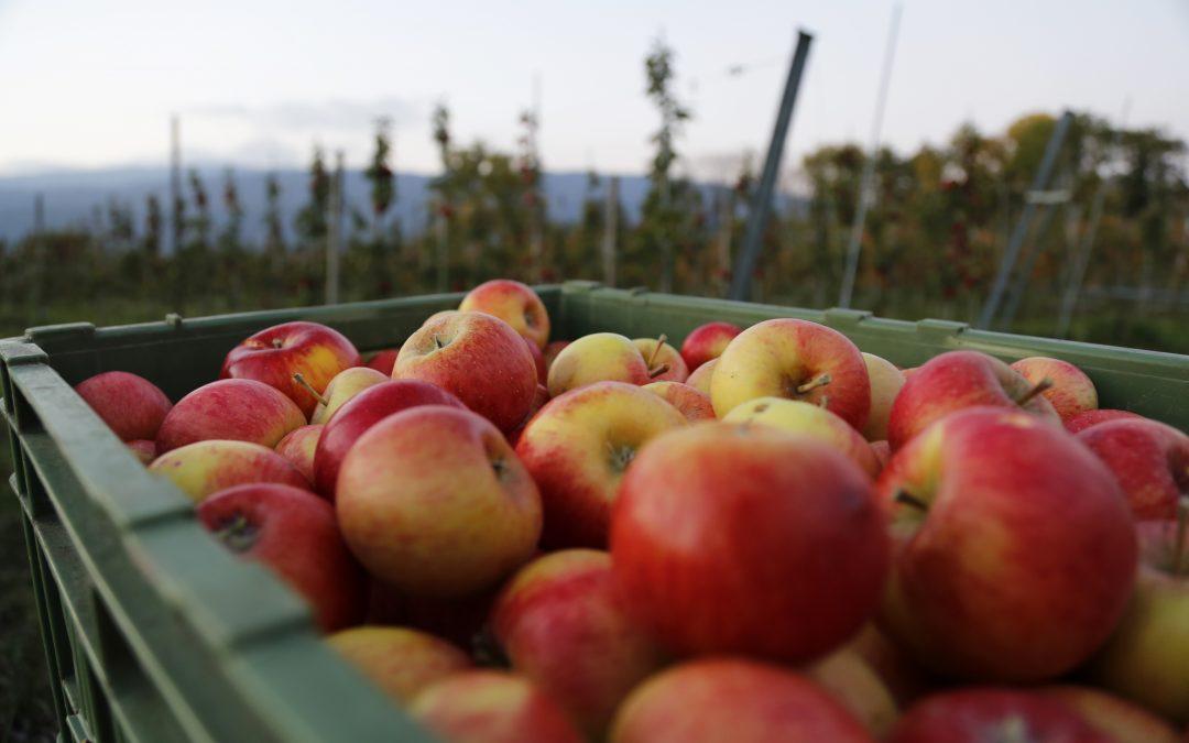 Zaměstnávání cizinců v zemědělství – 1.část: Jak legálně zaměstnat cizince?