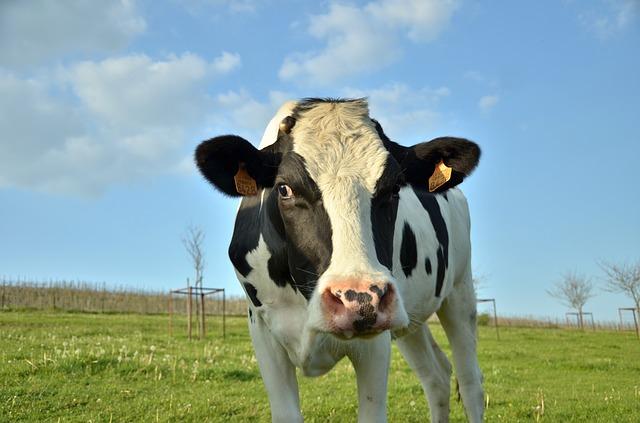 Mléčná farma roku 2020 zná své vítěze