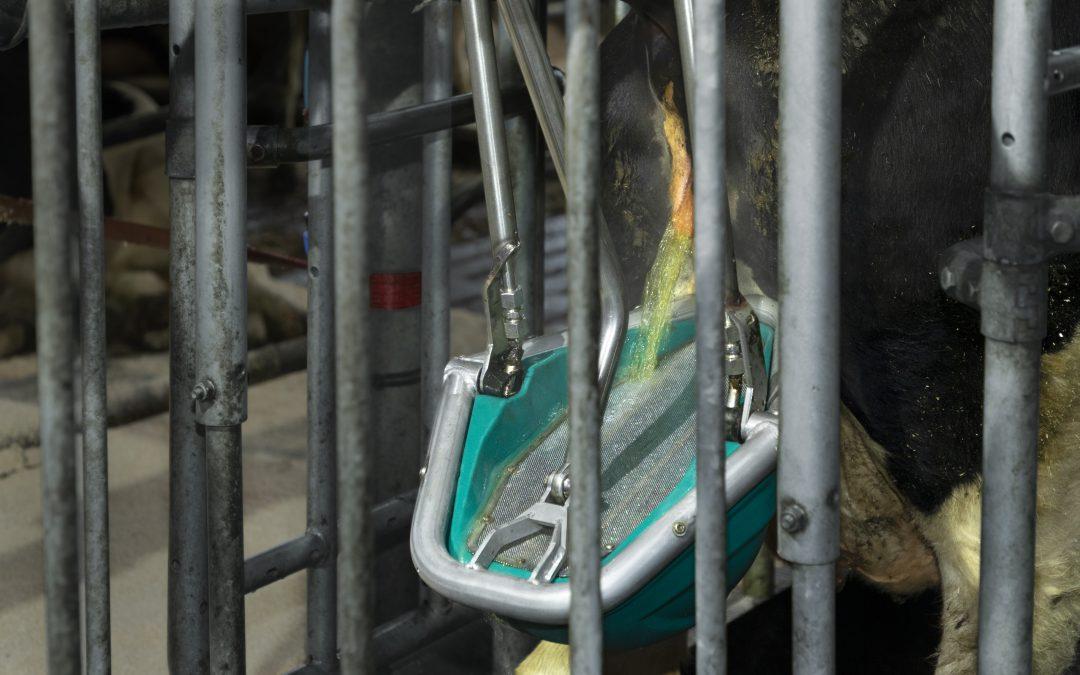 Holandská toaleta pro krávy získala na EuroTier 2021 zlatou medaili